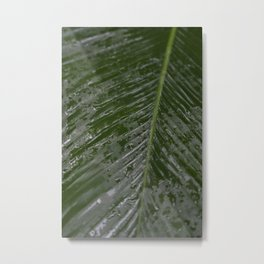 Raindrops on a dark green tropical leaf - botanical nature photography Metal Print