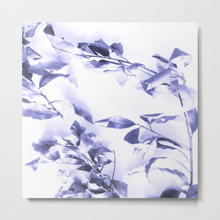 Bay leaves 3 Metal Print