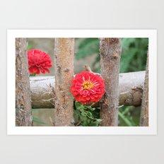 Flower on fence Art Print