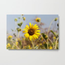 Sunflower - Bright Wildflower on a Summer Day Metal Print