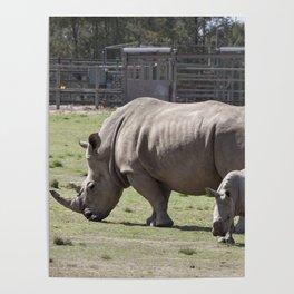 White Rhino and Calf Poster