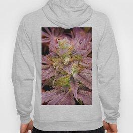 Passionately Purple Hoody