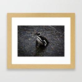 Ushuaia Penguin Framed Art Print