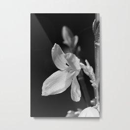 forsythia black and white Metal Print