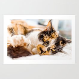 Glamour cat 2 Art Print