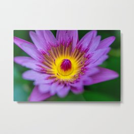 Purple Waterlily Macro Metal Print