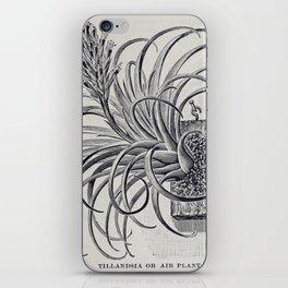 Botanical Air Plant iPhone Skin