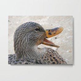 Chatty Metal Print