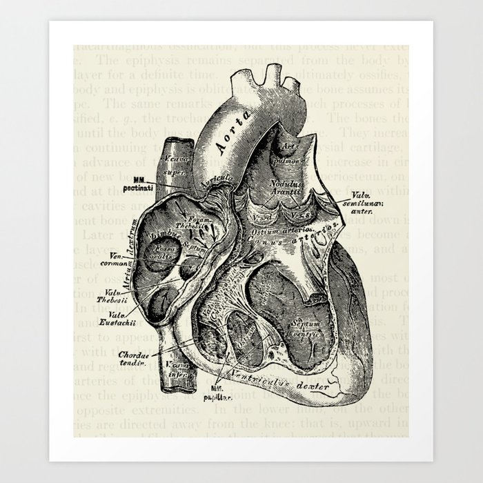 caeedc9a380254 Vintage Anatomy Heart Medical Illustration Art Print by ...