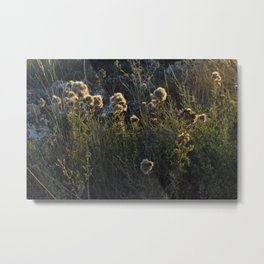 That´s not cotton but looks like it Metal Print