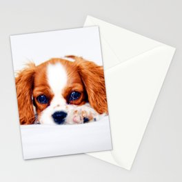 Cavalier King Charles Stationery Cards