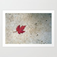 Red Leaf on Concrete Art Print