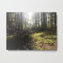 Mossy Floor. Rushmere Country Park, Bedfordshire. UK Metal Print