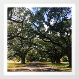 Intersecting Trees Art Print