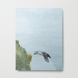 Minimalistic image of a razorbill flying with the Atlantic Ocean in the backdrop at Latrabjarg | Nature photography Iceland Metal Print