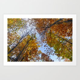 """""""Up in the air"""". Forest colors Art Print"""