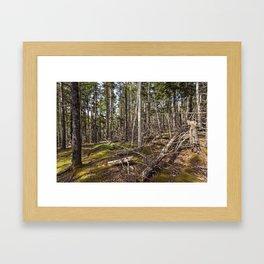 acadian woods Framed Art Print