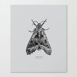 Cabbage Moth [Mamestra brassicae] Canvas Print