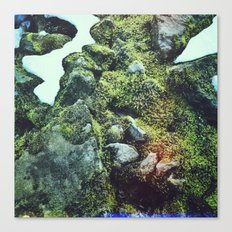 Moss on rocks number 2 Canvas Print