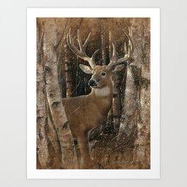 Deer - Birchwood Buck Art Print