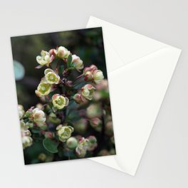 TINY FLOWERS OF A BERBERIS Stationery Cards
