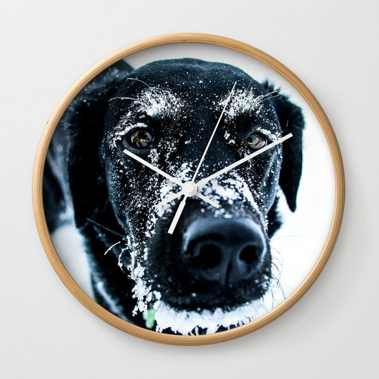 Snow Dog // Cross Country Skiing Black and White Animal Photography Winter Puppy Ice Fur by byrdonwheels
