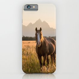 Horses Grazing Below the Tetons iPhone Case