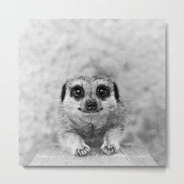 Smiling Meerkat Metal Print