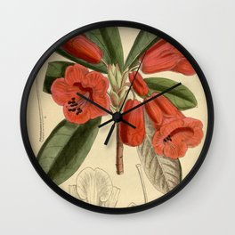 Rhododendron dichroanthum, Ericaceae Wall Clock