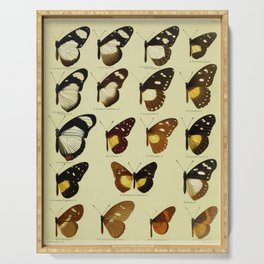 Vintage Butterfly Print - African Mimetic Butterflies (1910) - Friar Butterfly & Mimics Serving Tray