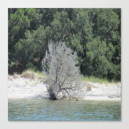 The Skeleton Tree on the Beach Canvas Print