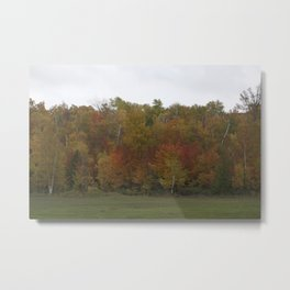 Autumn's Colors Metal Print