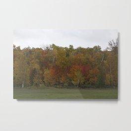 Autumn's Colors Metal Print