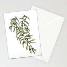 Olive Branch Botanical Art Stationery Cards