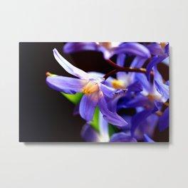 Bluestar bloom Metal Print