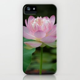The Lotus Rises From the Mud iPhone Case