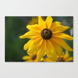 Sunny Flower Canvas Print