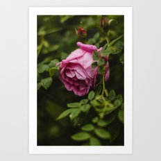 PINK - ROSE - FLOWER - PHOTOGRAPHY Art Print