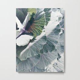 Cabbage in Sunlight Metal Print