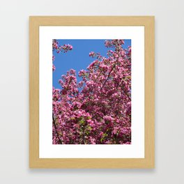 Spring blossoms pink Framed Art Print