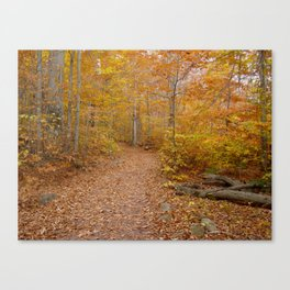 Color Canvas Print