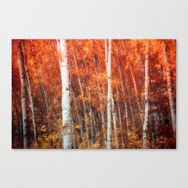 Birch Grove Canvas Print