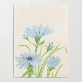 Watercolor Garden Flower Blue Cornflower Wildflower Poster