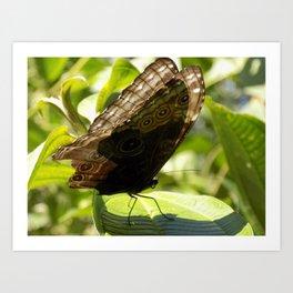 butterfly bathing in the sunlight Art Print