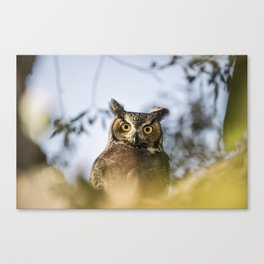 Okanagan Owl Canvas Print
