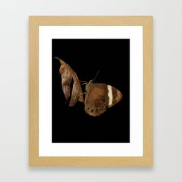 Brown butterfly - 109 Framed Art Print