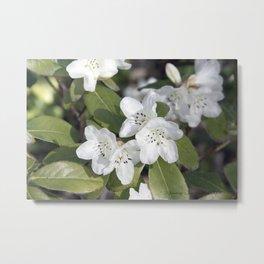 Little White Flowers Metal Print