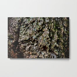 Do You Lichen This? Metal Print