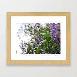 Lilacs Framed Art Print