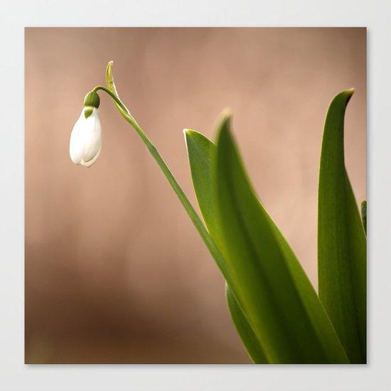 Spring Flower Snowdrop  Canvas Print